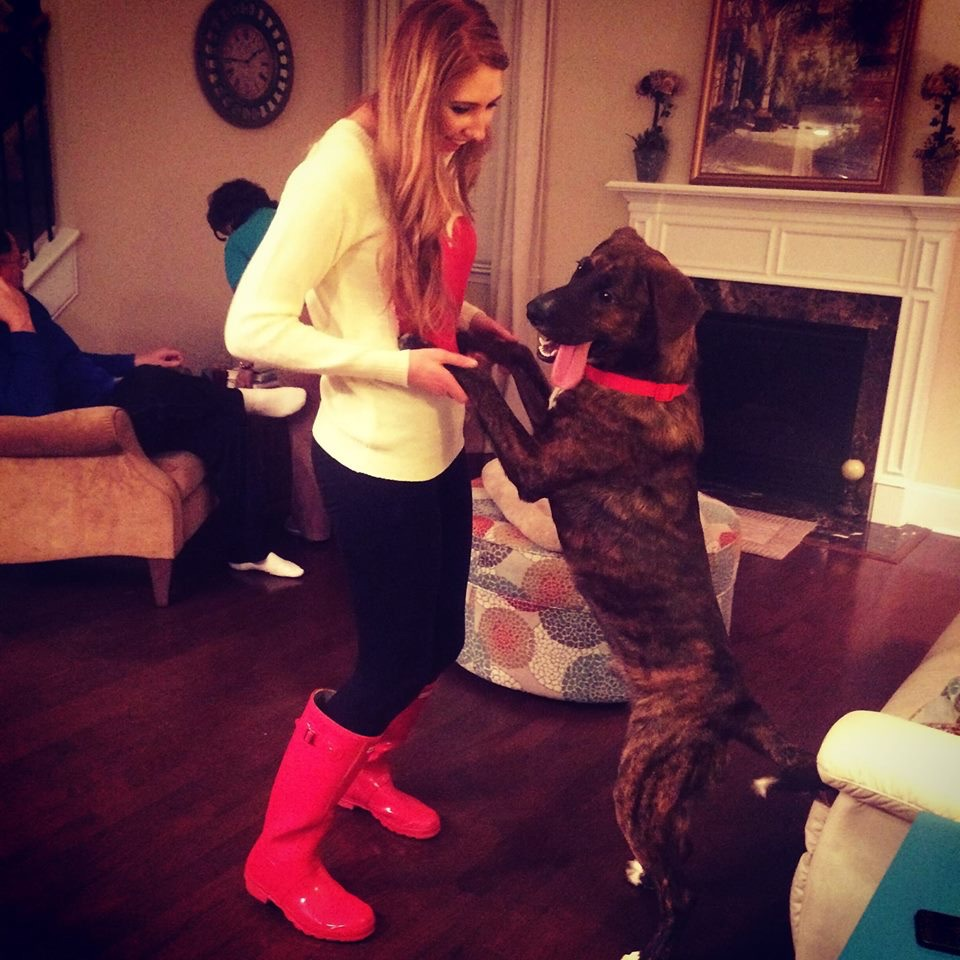 Chevy my favorite hound dog